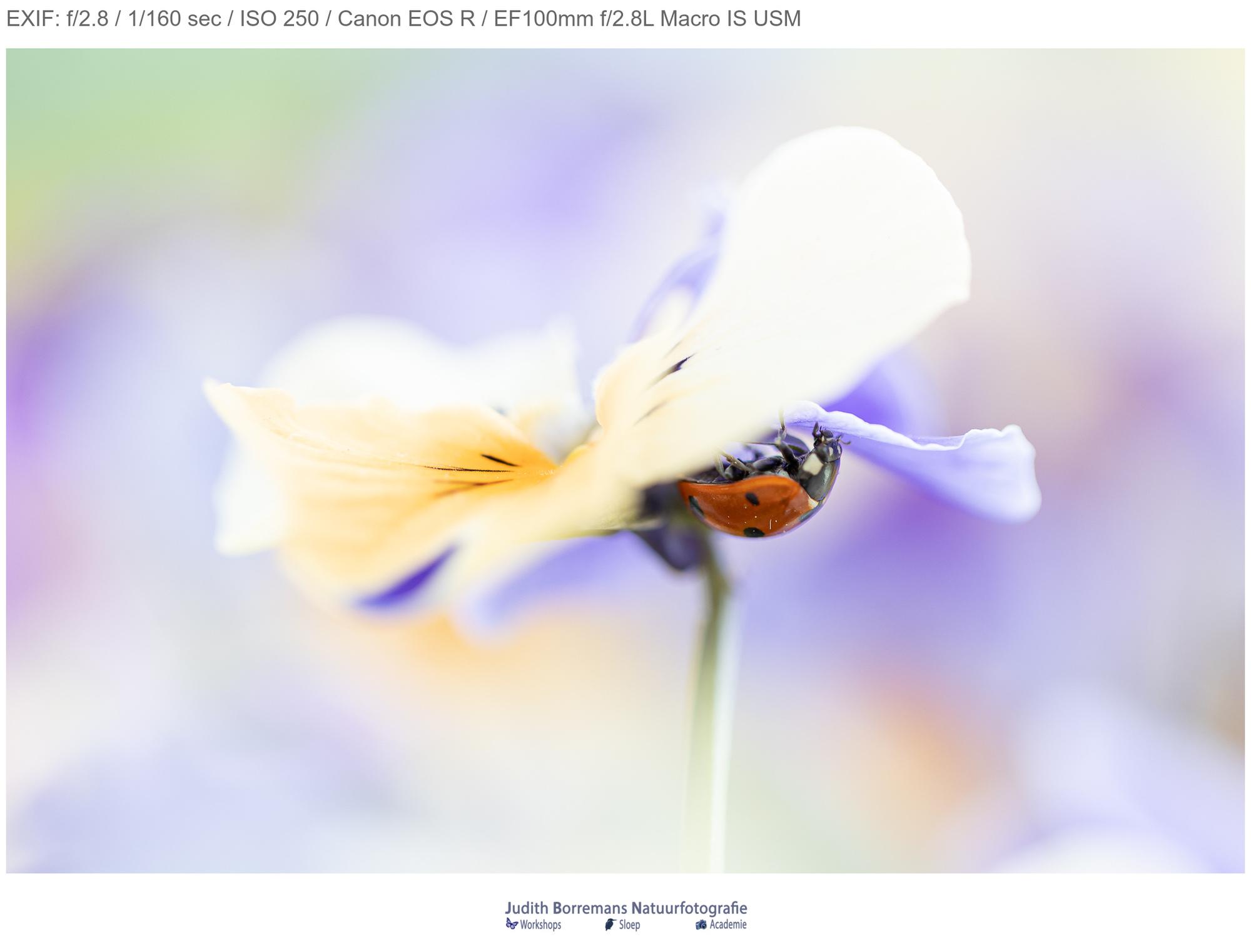 lieveheersbeestje-2